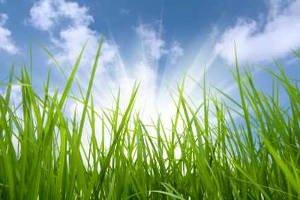Rasenpflege nach Jahreszeit